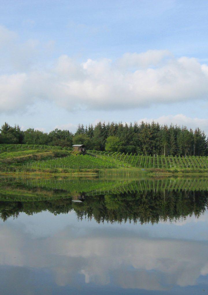 Skærsøgaard – dansk vin med og uden bobler